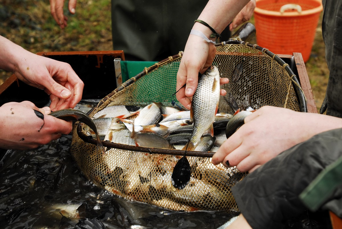 Bassins vente de materiel pour bassins de jardin for Materiel de bassin